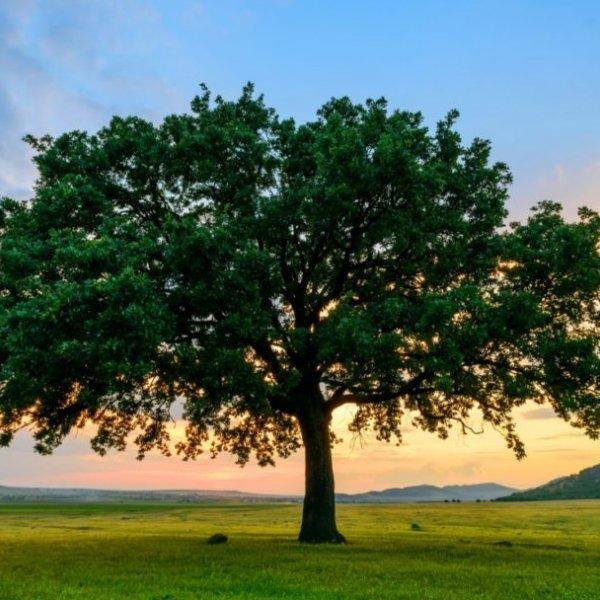 L'importanza del cibo nella questione ambientale - di Paolo Treglia